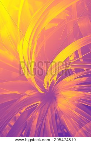 Beautiful Tropical Nature Summer Background. Jungle Plants With Long Needle Like Dangling Leaves In
