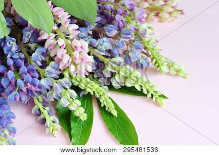 Pink And Purple Lupine Flowers On Marble Background. Birthday, Mother's Day, Valentine's Day, March