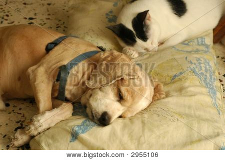 Cat Dog Sleeping