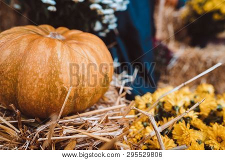 Autumn Decoration With Pumpkins On A Street In A European City