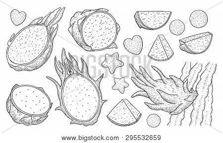 Dragon Fruit.pitaya.pitahaya Whole And Sliced Exotic Fruit Isolated On White Background.energy Food,