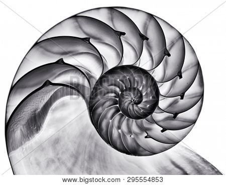 Detailed photo of a halved backlit  shell of a chambered nautilus (Nautilus pompilius) isolated on white. Contrasty black and white