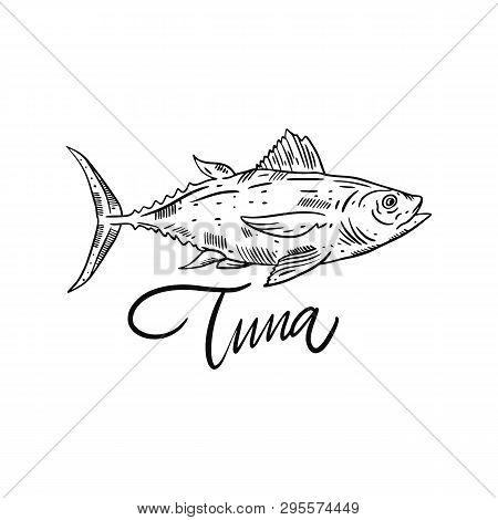 Fish Tuna. Hand Drawn Vector Illustration. Engraving Style. Isolated On White Background.