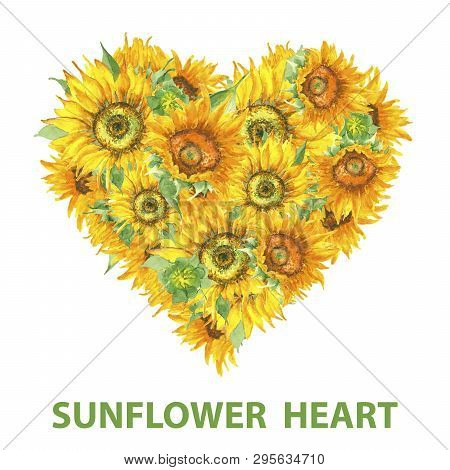 Sunflower Heart Shape Banner In Watercolor Style. Blossom Sunflower Heart Template Isolated On Wite