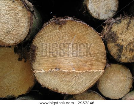 Chopped Log Close Up