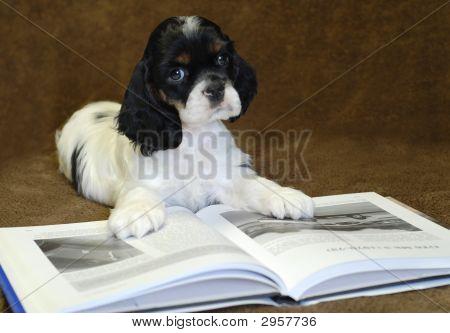 Tri Reading Book