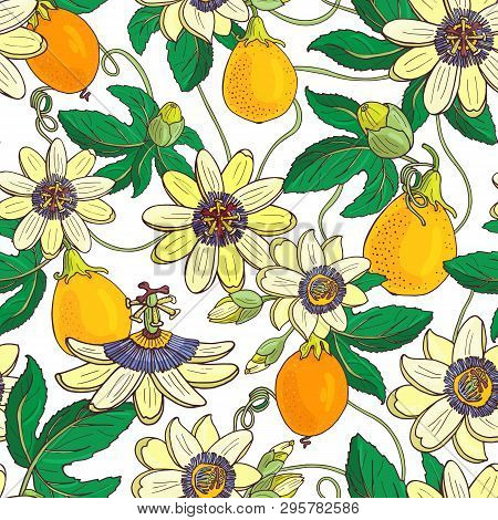 Passionflower Passiflora,passion Fruit On A White Background.floral Seamless Pattern With Big Bright