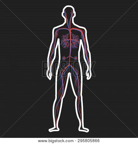 Circulation System Of Human On Dark Background Vector Illustration