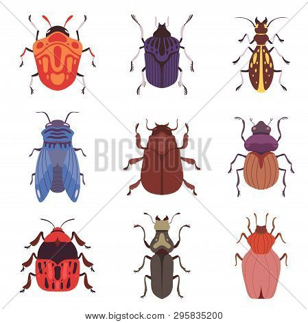 Collection Of Bugs And Beetles, Various Insects Species Top View Vector Illustration
