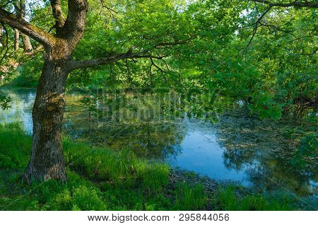 Summer forest landscape - green deciduous forest oak tree on the bank of the small forest river in summer sunny weather. Summer forest nature scene