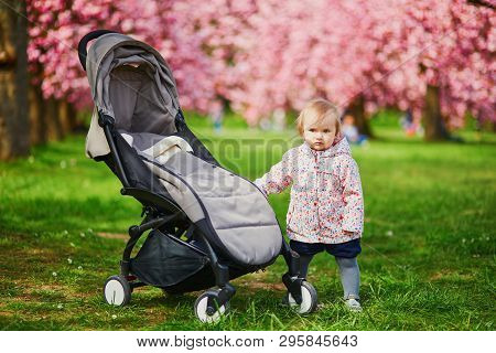 One Year Old Girl Standing Next To Her Pushchair In Park At Cherry Blossom Season. Little Kid Enjoyi