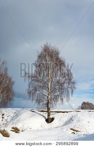A Single White-trunched Birch On A Steep Snowy Slope Against A Cloudy Sky.