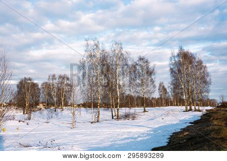 Beautiful March Landscape With Birches In The Rays Of The Setting Sun.