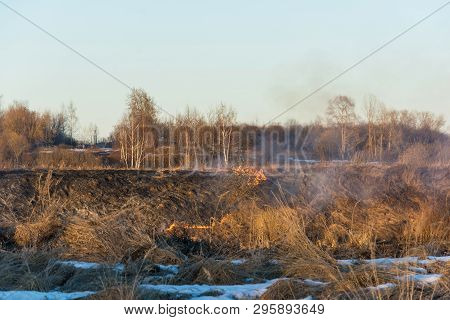 Last Year's Burning Grass On The Bank Of A Small River In The Rays Of The Evening Sun.
