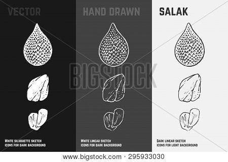 Hand Drawn Salak Fruit Or Salacca Icons Set Isolated On White, Gray And Black Chalk Background. Sket