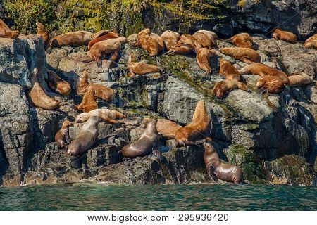 Seal Colony On Rock In Glacial Water Of Prince William Sound In Alaska