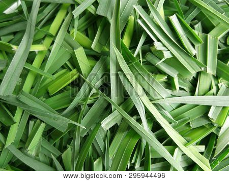 Background Of Fresh Green Leaves. Creative Layout Made Of Grass.