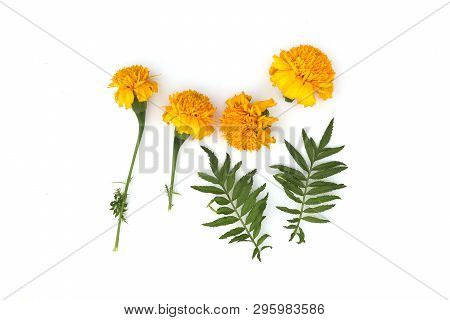 Marigold Flowers So Beautiful, Yellow Marigold Flower, Tagetes Erecta, Mexican Marigold, Aztec Marig