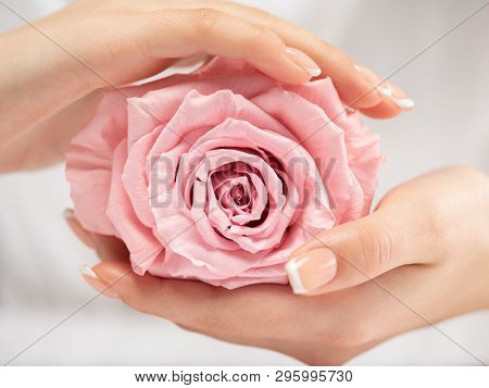 Beautiful woman's nails with french manicure and rose. Beautiful female hands. Hand care. Woman cares for the nails on hands. Beauty treatment with skin of hand.   Woman's hands close-up view.