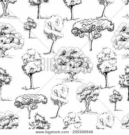 Seamless Pattern With Monochrome Hand Drawn Trees In Sketch Style Isolated On White Background. Vect
