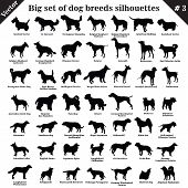 Big set of 49 different dogs, hounds, working, shepherd, terrier, companion, hunting. Vector set of different  dogs standing in profile. Isolated dogs breed silhouettes set in black color on white background. Part 3 poster