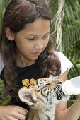 Child feeding baby tiger in a Zoo in Bangkok poster
