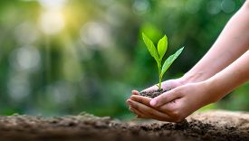 Environment Earth Day In The Hands Of Trees Growing Seedlings. Bokeh Green Background Female Hand Ho