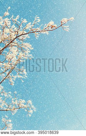 Winter landscape of snowy winter tree branches against colorful blue sky during the snowfall with copy space for text. Winter background, winter forest landscape, winter forest nature