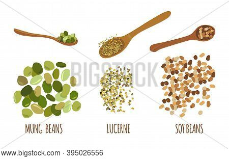 Legumes Doodle Set.mung Beans, Soy And Alfalfa Seeds.lucerne And Green Gram Hand Drawn Illustration.