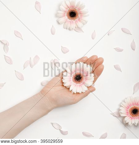 Fashion Is The Art Of Hand Skin Care And White Flowers On A Woman's Hands. Creative Beauty Of A Phot