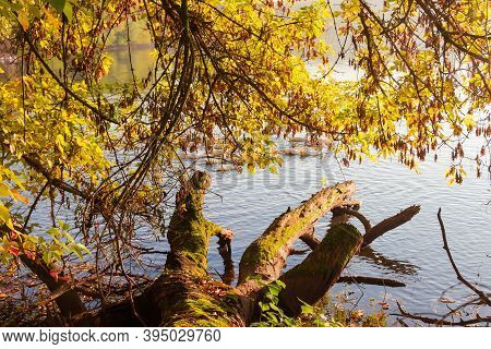 Shore Of The Pond With Rotten Snag And Overhanging Branches Over Water On A Foreground In The Autumn