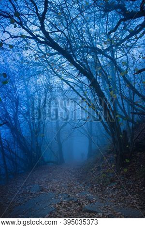 Beautiful Mystical Forest In Blue Fog In Autumn.scenery With Path In Dreamy Foggy Forest.path To Adv