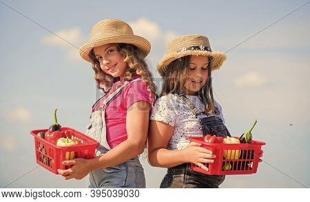 Village Rustic Style. Vegetables Market. Natural Vitamin Nutrition. Organic Vegetables. Girls Cute C