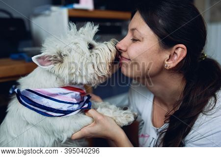 A Lovely West Highland White Terrier Kisses Licks The Owner. Girl With Her Favorite Dog In The Apart