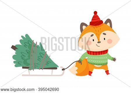 Orange Fox As Christmas Character In Warm Knitted Hat And Sweater Pulling Sledge With Fir Tree Vecto