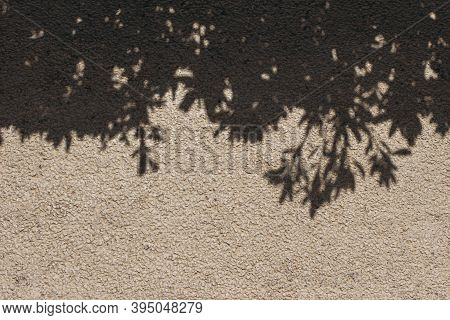 Tree Branches And Leaves Shadows On Beige Concrete Rough Textured Background, Wall. Dark Silhouette