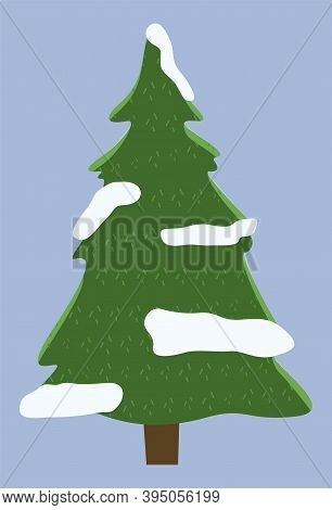 Lush Green Spruce With Snowballs. Evergreen Coniferous Tree. Good New Year Spirit. Forest Coniferous