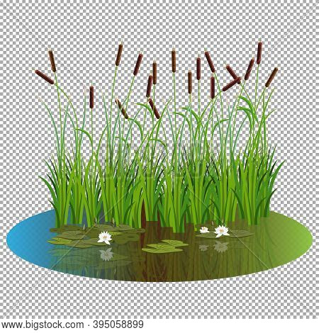 Bush Reeds With Water Lily Flowers And Leaves On The Pond Water. Reeds Stern And White Water Lily Re