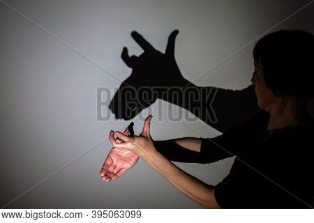 Play Shadow Projected On A White Screen. Play Shadow Projected On A White Screen. The Person's Hands