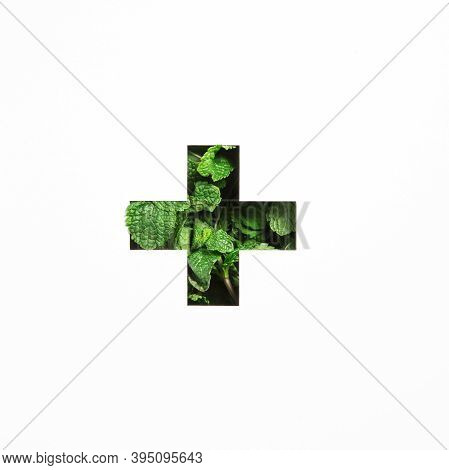 Plus Summation Sign Or Cross Of Green Natural Mint, Cut Paper Isolated On White. Menthol Peppermint