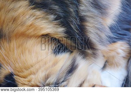 Close-up View Of The Calico Coat Of A Cat