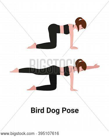 Girl Do The Bird-dog Exercise Or Quadruped Or Dandayamana Bharmanasana Yoga Pose For Back Pain. Flat