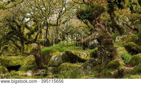 Two Trees That Look Like A Father And Son Playing Catch. The Trees Are Covered In Ferns And Lichen A