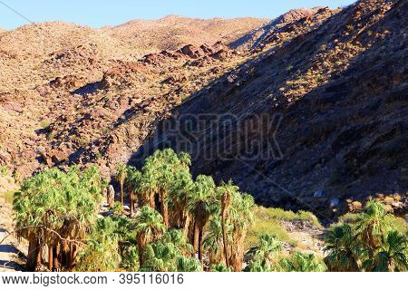 California Fan Palm Trees Besides A Creek At A Natural Oasis Surrounded By Barren Badlands Taken In