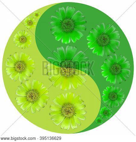 Floral Symbol Yin-yang. Calendula. Geometric Pattern Of Yin-yang Symbol, From Plants On Colored Back