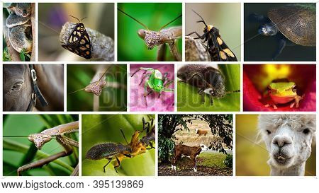 Collage Of Fourteen Images Close Up Of Australian Animals And Wildlife