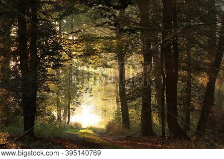 Road path autumn forest Nature trees landscape sunrise Nature landscape alley landscape Nature background woods Nature landscape sunset Nature background landscape Nature background Nature landscape Nature background Nature landscape Nature background.
