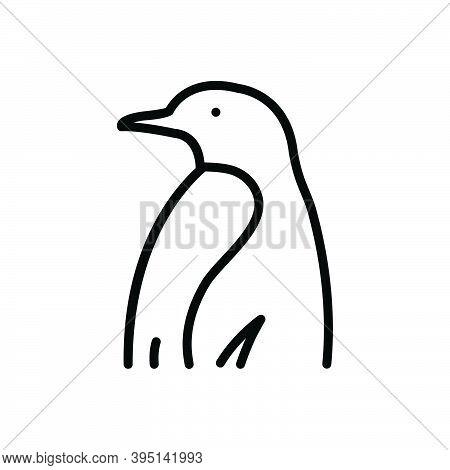Black Line Icon For Creature Critter Brute Penguin Spheniscidae Animal Antarctic Black-and-white Doo