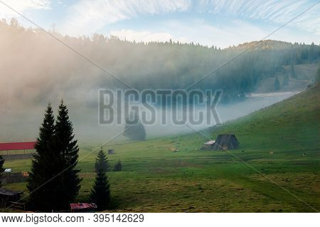 Trees In The Valley Of Mountainous Natural Park. Foggy Dawn In Autumn Season. Beautiful Rolling Land