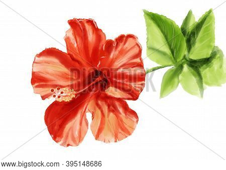 Realistic Illustration With Red Hibiscus Flower. Hand Drawn Sketch Isolated On White Background.